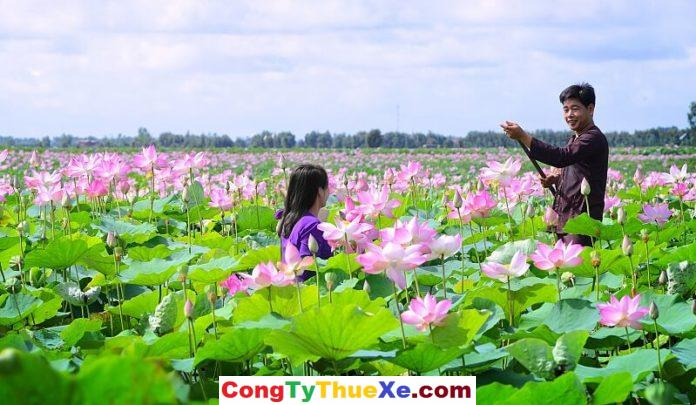 Hồ Sen Đồng Tháp Mười