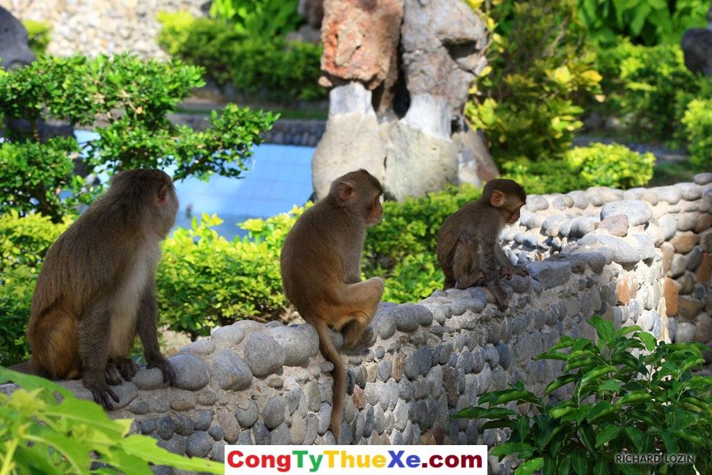 thuê xe đi Nha Trang Đào Khỉ (1)